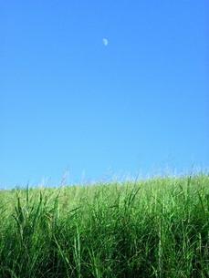 草原と昼の月の写真素材 [FYI00325610]
