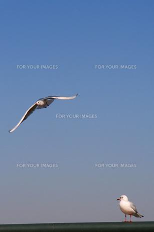 2羽のカモメの写真素材 [FYI00325638]