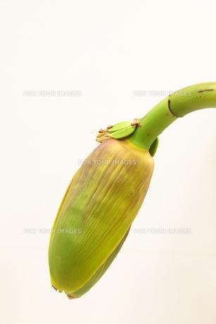 バナナの花と実の写真素材 [FYI00325713]