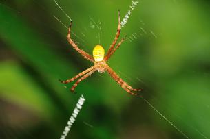 蜘蛛の写真素材 [FYI00325906]