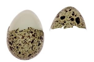 ウズラの卵の写真素材 [FYI00327351]