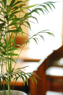 カフェの店内の写真素材 [FYI00327652]