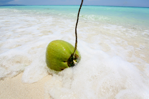 砕ける波にココナッツの写真素材 [FYI00327667]