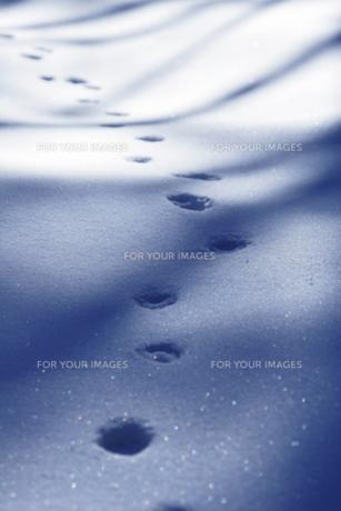雪原の足跡の写真素材 [FYI00327674]