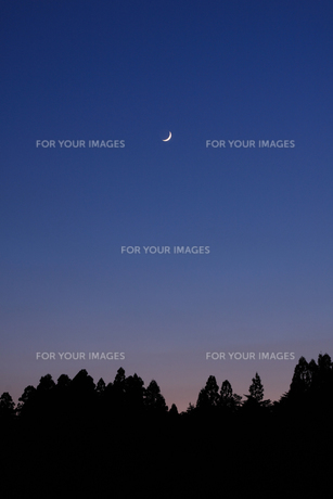 三日月と森の写真素材 [FYI00327697]