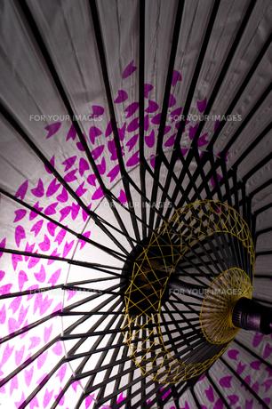 桜和傘の写真素材 [FYI00327735]
