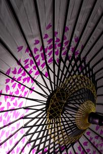 桜和傘の素材 [FYI00327735]