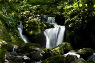 深緑の滝の素材 [FYI00327761]