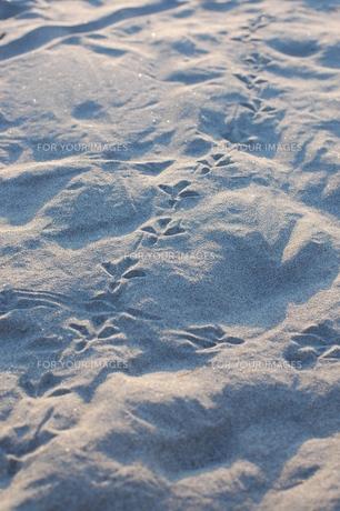 鳥の足跡の写真素材 [FYI00327880]
