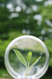 レンズの中の新芽の写真素材 [FYI00328085]