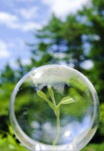 レンズの中の新芽の写真素材 [FYI00328099]