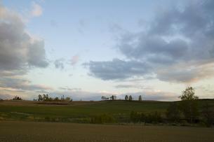 夕日の丘の木立の写真素材 [FYI00328113]