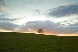 夕焼けの丘に立つ木の写真素材 [FYI00328114]