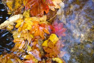 水辺の落ち葉の写真素材 [FYI00328115]