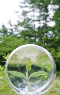 レンズの中の新芽の写真素材 [FYI00328117]