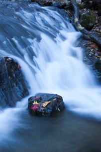 清流の岩に落ちたモミジの写真素材 [FYI00328128]
