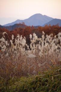 夕暮れのススキ野原の写真素材 [FYI00328134]