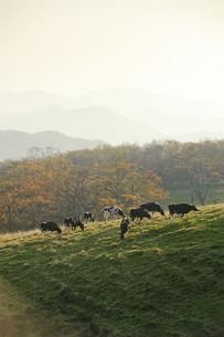 早朝の牧場の写真素材 [FYI00328142]