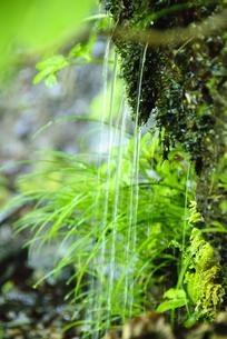 新緑の岩清水の写真素材 [FYI00328143]