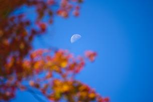 紅葉と月の写真素材 [FYI00328145]