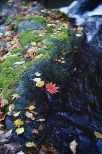 渓谷の落ち葉の写真素材 [FYI00328162]