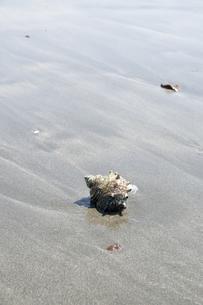 波打ち際の貝殻の写真素材 [FYI00328164]