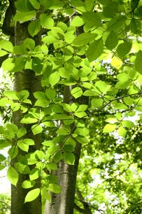 新緑の陽射しの写真素材 [FYI00328167]