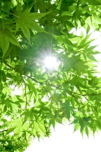新緑の日差しの写真素材 [FYI00328175]