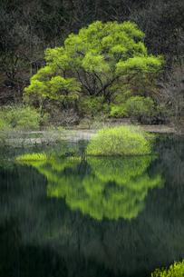 湖面に映った新緑の木の写真素材 [FYI00328181]