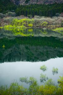 春の山間の湖の写真素材 [FYI00328182]