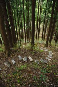 ヒノキ林の山道の写真素材 [FYI00328184]
