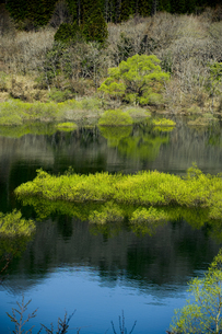 水辺に映る新緑の写真素材 [FYI00328185]
