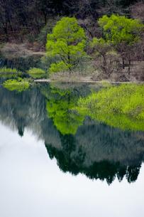 春の木々を映す湖面の写真素材 [FYI00328188]