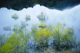 湖面の映る新緑と山並みの写真素材 [FYI00328192]