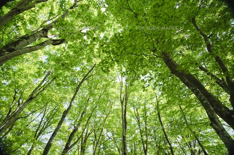 新緑の雑木林の素材 [FYI00328239]