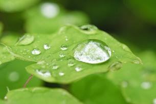葉っぱの上の水玉の写真素材 [FYI00328251]