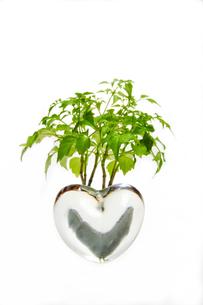 ガラスのハートに育つ植物の写真素材 [FYI00328324]