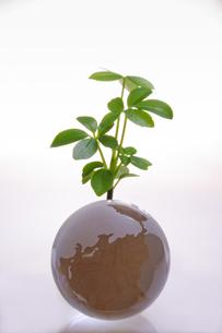 ガラスの地球儀に育つ植物の写真素材 [FYI00328334]