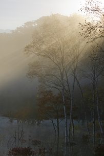 小田代が原の朝の陽射しの写真素材 [FYI00328351]