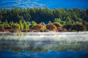 秋の朝の小田代が原の写真素材 [FYI00328355]