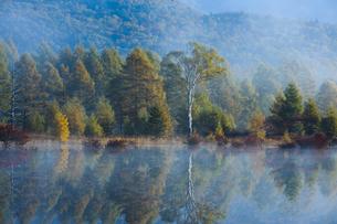 朝もやの湖面に映る白樺の写真素材 [FYI00328356]