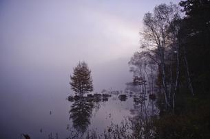 早朝の小田代湖の写真素材 [FYI00328359]