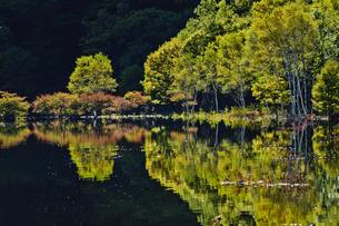 水辺に映る木立の写真素材 [FYI00328363]