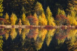 湖面に映る晩秋の木立の写真素材 [FYI00328364]