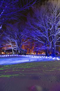 雪の木立ライトアップの写真素材 [FYI00328385]