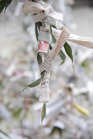 笹の葉のおみくじの写真素材 [FYI00328388]
