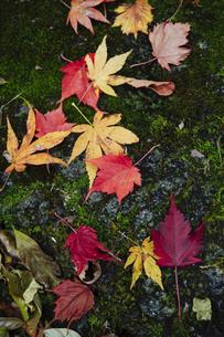 色とりどりの落ち葉の写真素材 [FYI00328432]