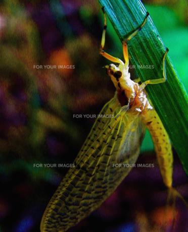 昆虫の写真素材 [FYI00328526]