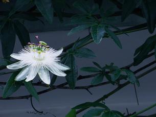 花の写真素材 [FYI00328552]