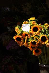 花の写真素材 [FYI00328571]